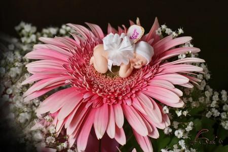 baby op bloem 2